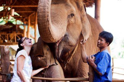 GTAEF werkt aan totaaloplossing voor Thaise olifanten