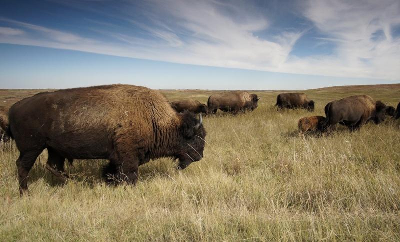 North & South Dakota vieren 125e verjaardag